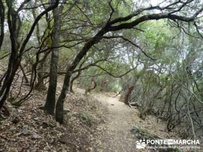 Parque Nacional Monfragüe - Reserva Natural Garganta de los Infiernos-Jerte;viajes y excursiones